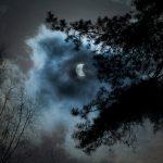 Έκλειψη Σελήνης, θέα από το δάσος